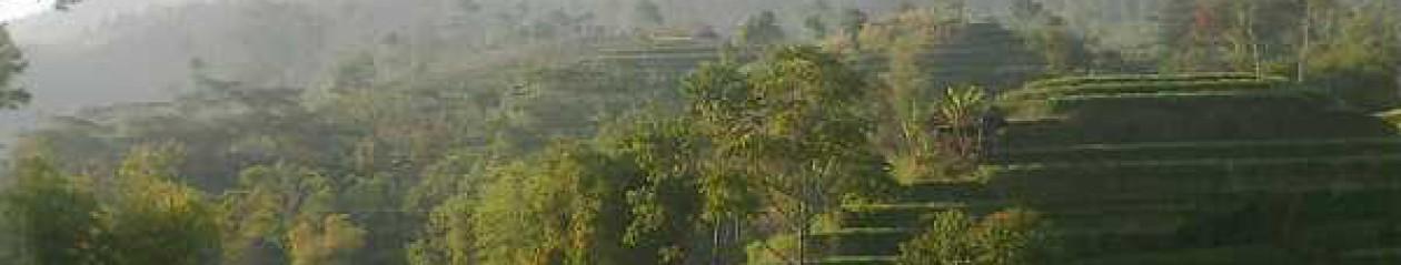 Puyuh Kalapa Jaya